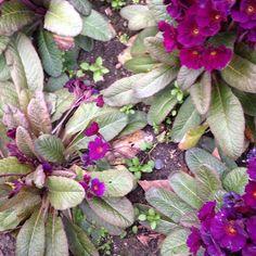 litadoolan.com Bloom boom #floral #london #purple