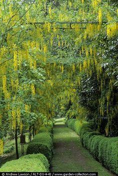 awwwwwesome tranquility garden path!!!!