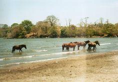 horses on the beach on Isla de Ometepe, Nicaragua #nicaragua #beach #horses