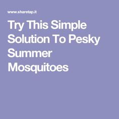 Try This Simple Solution To Pesky Summer Mosquitoes