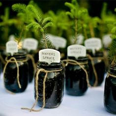 Try thinking outside the favors box with these more interesting winter wedding favors.The Winter Wedding Favor Ultimate Guide to Sending Your Guests Home Happy. Wedding Favors And Gifts, Wedding Favours For Ladies, Plant Wedding Favors, Wedding Favour Jars, Wedding Plants, Winter Wedding Favors, Creative Wedding Favors, Tree Wedding, Wedding Ideas