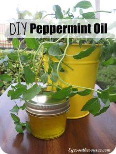 Peppermint Oil, all you need is:Fresh Peppermint Leaves, Olive Oil, Glass Container I have TONS of mint growing. Peppermint Oil, Healing Herbs, Medicinal Herbs, Herbal Remedies, Natural Remedies, Tapas, Making Essential Oils, Infused Oils, Essential Oils