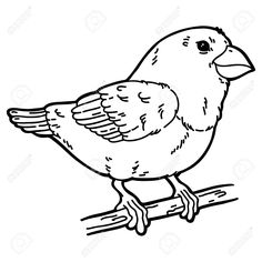 image result for outline of bird