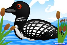how to draw a loon, loon bird