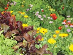 Bunte Mischung Blumen Salat