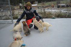 Gårdstunet Hundepensjonat: Deilig lørdag, og lekne hunder på tunet! Dogs, Animals, Dog, Animales, Animaux, Pet Dogs, Doggies, Animal, Animais