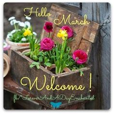 Welcome March Images Pictures Photos Wallpaper - Free June 2020 Calendar Printable Blank Templates & Holidays Hello March Images, March Quotes, Welcome Pictures, Month Flowers, Photos For Facebook, Facebook Profile, March Month, February, Tumblr Image