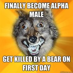 Yo, dudes: Alpha males are a myth, according to actual experts onwolves    by David Futrelle