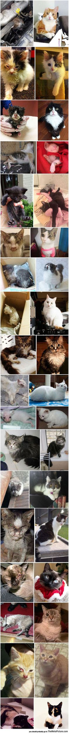 Take a look at these before and after rescue pix - Cats are so BADASS! Thx to all who save animals! Save Animals, Animals And Pets, Funny Animals, I Love Cats, Cute Cats, Funny Cats, Crazy Cat Lady, Crazy Cats, Amor Animal