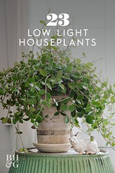 If you're looking for plants that don't require tons of sunlight check out this list of 23 of our favorite low-light plants. If you're looking for plants that don't require tons of sunlight check out this list of 23 of our favorite low-light plants. House Plants Decor, Plant Decor, Garden Plants, Patio Plants, Plants In The House, Flowering House Plants, Garden Shrubs, Indoor Gardening Supplies, Container Gardening