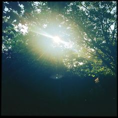 This where I'm #writing today. #sun #summer #forest #trees
