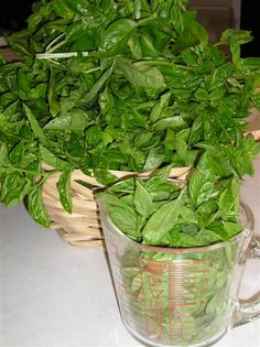 How to harvest and preserve basil --Just got my awesome new basil plant!
