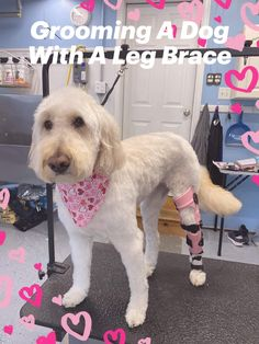 How to Groom a Dog with a Brace Braces, Your Dog, Groom, Legs, Learning, Simple, Animals, Animais, Animales