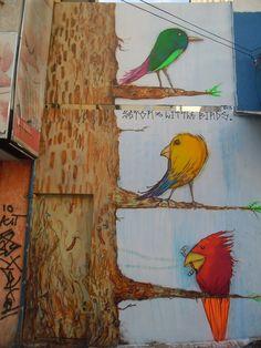 Santo André 2013: seTOr 3  ;liTTLE birds