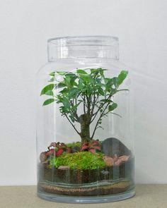 Bonsai Ficus, Ficus Pumila, Plant In Glass, Glass Vase, Green Factory, Paris, Trees To Plant, Decor, Ficus Microcarpa
