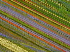 castelluccio di norcia fioritura 2016 - Cerca con Google