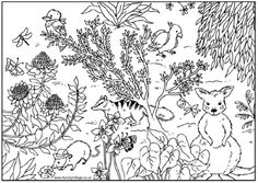 Australian Animal Colouring Pages