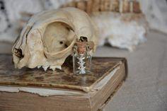 Vertèbres de serpent par AlvaHowlCreations sur Etsy #bonejewelry