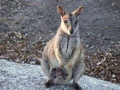 Mareeba ♡♡ Australia
