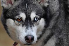 Подготовка к гонке на собачьих упряжках в Шотландии « FotoRelax