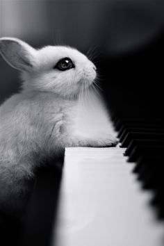 15 Animals That Have Started Their Own Band. This rabbit hopes heavy eye liner will make her piano playing seem more edgy.