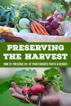Looking for more ways to preserve your harvest this year? Check out How to Preserve Oranges and see what 30+ other bloggers have shared also!