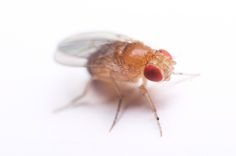 Desperate Gardener: Grandma's Secret Weapons: Fruit Flies