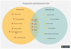 Venn diagram example showing a is a proper subset of b and a venn diagram showing prokaryotic and eukaryotic cells you can edit this venn diagram using creately diagramming tool and include in your ccuart Image collections