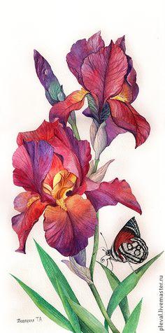 Купить Картина акварелью Малиновые ирисы и бабочка - ярко-красный, ботанический рисунок, картины цветов