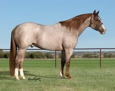 Bet Hesa Cat....roan Quarter Horse stallion
