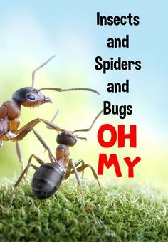 Dragon's Den Curriculum: Insects, and Spiders, and Bugs OH MY!!!