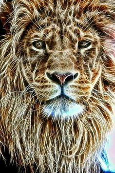 Electrifying power of the Lion of Judah Lion Images, Lion Pictures, Beautiful Cats, Animals Beautiful, Art Fractal, Animals And Pets, Cute Animals, Gato Grande, Lion Love