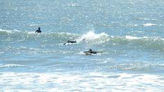 Surfers, Punta del Este, Uruguay