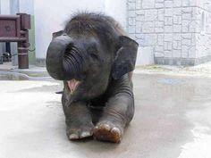 Adorable baby elephant ♥