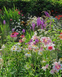 Cottage garden flowers (Daisies, Liatris, Lilies, Crocosmia, Monarda, Echinacea)