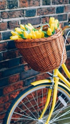 Yellow tulips in the front basket of a yellow bike