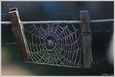 Didier Caron shared this very cool spider web with Google+: