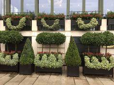 Long Planter - Versailles Planters - www.classic-garden-elements.co.uk - Garden-Obelisks, Rose Arches, Rose Arbours, Trellises and Planters