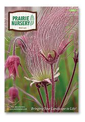 Prairie Nursery Native Plants Seeds No Mow Lawn
