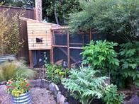 Placement of your chicken coop is crucial and this example from Oregon integrates the structure into a bucolic setting. Place your chicken house on solid, level ground with good drainage in an area that gets partial sun and shade but not too much of either. It is also good to place the coop near a fence or wall that will help block the prevailing winds.