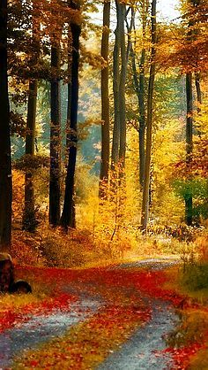 Autumn Afternoon.... gorgeous fall colors in the woods - Via Rocky Whitten