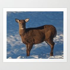 Nature Art Print by LEEMARIE - $17.68  http://society6.com/product/nature-ns5_print?curator=listenleemarie