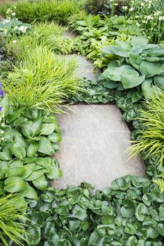 gorgeous green plants that surround the cement walking stones on the garden walkway! Garden Borders, Garden Paths, Outdoor Plants, Outdoor Gardens, Architectural Plants, Garden Deco, Shade Plants, Green Plants, Chelsea Flower