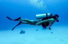 A guide that will help you plan for a perfect diving trip - CAH News Network Diving, Activities, How To Plan, News, Scuba Diving