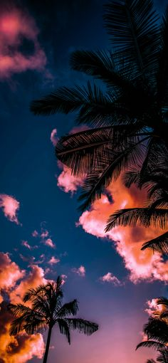 Miami - Download this wallpaper from Wallpapers Central