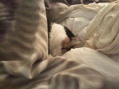 A cats life :)