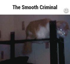 The Smooth Criminal | Lustige Bilder, Sprüche, Witze, echt lustig