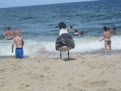 Feet in the Sand  bird is the word in Ocean City Maryland