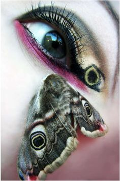butterfly eyes. like the incorporation of the spots