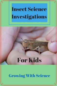Butterfly and Moth Insect Science Investigations at growing with Science Blog